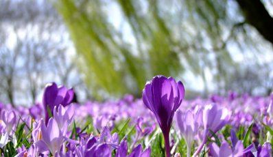 Wie man das Pflanzenwachstum beschleunigt