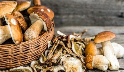 Trocknen von Pilzen